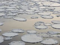 White round ice pieces on river current, Lithuania Royalty Free Stock Photography