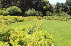 Beautiful round lawn in  summer garden Stock Photos