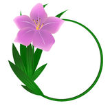 Beautiful round lily flower background Stock Image