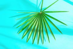 Beautiful Round Spiky Palm Leaf on Light Blue Background in Sunlight Leaks. Top View Flat Lay. Tropical Vacation Traveling Royalty Free Stock Photo