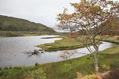 Beautiful rowanberry on background Upper Lake. Stock Image