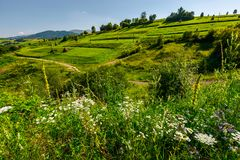 Path along the agricultural fields with haystacks. Beautiful rural area in mountains. lovely summer scenery in afternoon. path along the agricultural fields with royalty free stock images