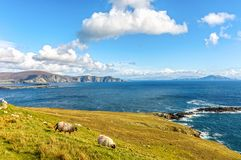 Beautiful rural irish country nature sheep landscape from the north west of ireland. Scenic achill island along the wild atlantic way. famous irish tourism royalty free stock image