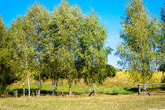 Beautiful rural landscape birch trees. Beautiful rural landscape of birch trees behind the fence Stock Photography