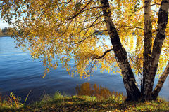 Beautiful rural landscape with birches on riverside Stock Photos
