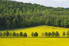 Beautiful rural landscape of blooming rapeseed with forest far away. Germany royalty free stock photo