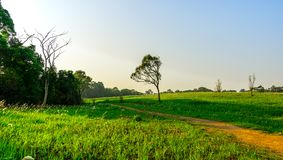 Beautiful rural landscape of green grass field with dusty country road and trees on hill and clear blue sky. Nature composition. Planet earth concept Stock Photos