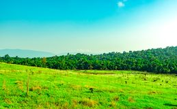 Beautiful rural landscape of green grass field with white flowers on clear blue sky background in the morning on sunshine day. Forest behind the hill. Planet Royalty Free Stock Photo