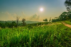 Beautiful rural landscape of green grass field with white flowers and dusty country road and trees on hill near the mountain. And blue sky, clouds and sunset Stock Photos