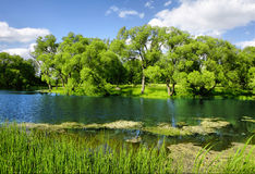 Beautiful rural landscape with a lake. Meadow and blue sky Royalty Free Stock Image