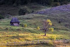 Beautiful rural landscape with and old house and a tree in Apuseni Mountains. Romania Stock Photo