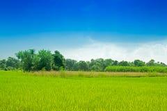 Beautiful rural landscape of Paddy field Stock Image
