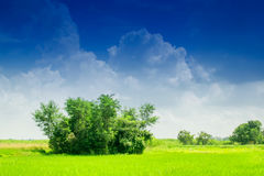Beautiful rural landscape of Paddy field Stock Photography