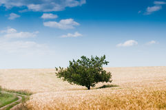 Beautiful rural landscape with tree Royalty Free Stock Photography