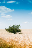 Beautiful rural landscape with tree Stock Images