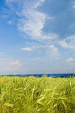 Beautiful rural landscape with wheat field. And blue sky Stock Image