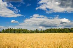 Beautiful rural landscape Royalty Free Stock Photo