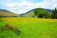 Beautiful rural scenery, Lake District Royalty Free Stock Photo