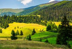 Beautiful rural scenery in mountains. Haystack on the grassy agricultural fields among the spruce forest on the hills Royalty Free Stock Images