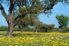Beautiful rural spring time Stock Image