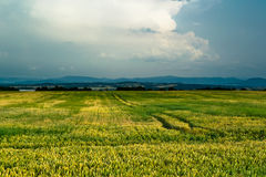 Beautiful rural view with cloudscape Stock Photo