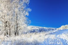 Rural winter landscape a with blue sky, a field and forest Stock Photography