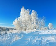Rural winter landscape a with blue sky, a field and forest Stock Photo