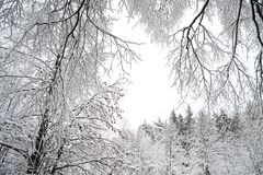 Rural winter landscape with forest and snow. Royalty Free Stock Photo