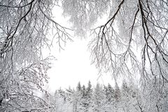 Rural winter landscape with forest and snow. Stock Photo
