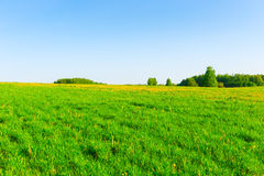 Beautiful Russian field Stock Image