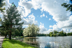 Beautiful russian landscape with willows Royalty Free Stock Photo