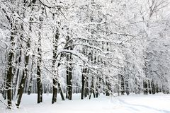 Beautiful Russian Winter Royalty Free Stock Photos