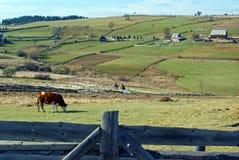 Beautiful rustic landscape Stock Photography