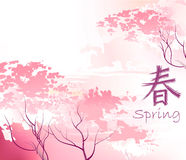 Beautiful sacura spring cherry tree Stock Photography