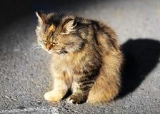 Beautiful sad cat Royalty Free Stock Photos