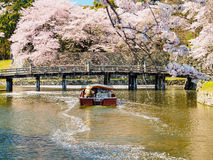 Beautiful Sakura blossom in Hikone, Japan 2 Stock Photos
