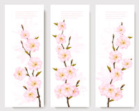 Beautiful sakura branch banners. Stock Image