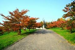 Beautiful sakura cherry at autumn time to remember Chiune Sugihara Royalty Free Stock Photos