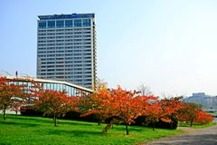 Beautiful sakura cherry at autumn time to remember Chiune Sugihara Royalty Free Stock Images