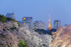 Beautiful sakura cherry blossom light up and Tokyo Tower Royalty Free Stock Photo