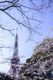 Beautiful Sakura Cherry Blossoms in Tokyo, Japan Royalty Free Stock Images