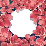 Beautiful Sakura Floral Template with White Round Frame. For Greeting Cards, Invitations, Announcements. Stock Photo
