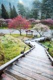 Beautiful Sakura Garden in Wuling F royalty free stock photography