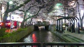 Beautiful sakura season in Kyoto city stree view with nice bridge for background stock footage