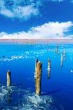 Beautiful salt lake Stock Image