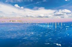 Beautiful salt lake Stock Photos