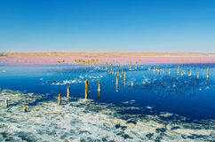 Beautiful salt lake Royalty Free Stock Photography