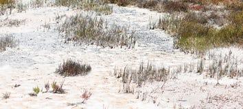 Beautiful salt meadow Royalty Free Stock Photography