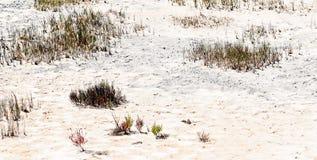 Beautiful salt meadow Stock Photography