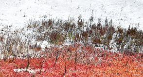 Beautiful salt meadow Royalty Free Stock Image